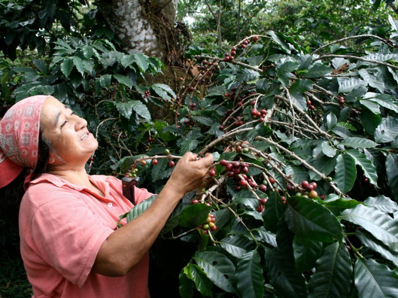 Bio Fairtrade Vegan direct